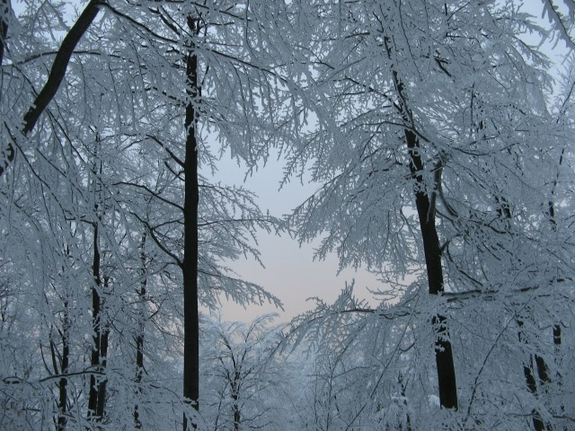 Javornik 31.12.2008 - foto