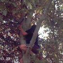 Štrakl: prokleta dreva, da si zajebana!