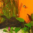 akvarij 120