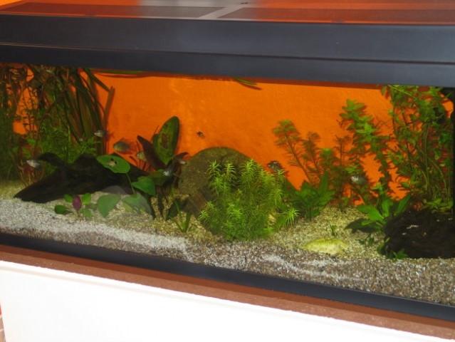 Akvarij 120 - foto
