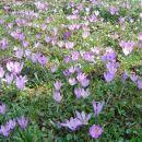 Evo, tole so pa slike letošnje pomladi.