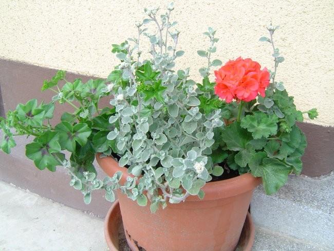 Vrt 06 - foto povečava