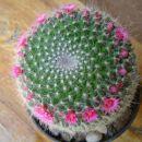 mamilarija junij 06- cel venec cveti :)