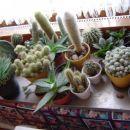 kaktusi med zimskim počitkom... (1)