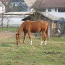s konjima