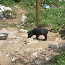 Mali psić kojega sam slikala na Zavižanu