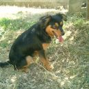 Bobi sitting in the garden