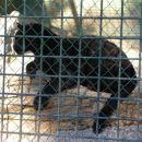Jaguar Može doći i u crnoj boji!