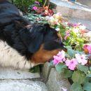07/07-Uživanje u cvijeću