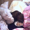 Kosilo v postelji