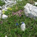 Nagradno vprašanje: naštej vsaj tri rože, ki jih vidiš