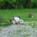 Zajčka na kmetiji Šeruga