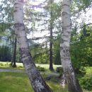 sestri brezi