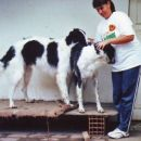 uor borzoi from serbia