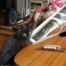 .. ja, tud glasbena izobrazba je koristna...