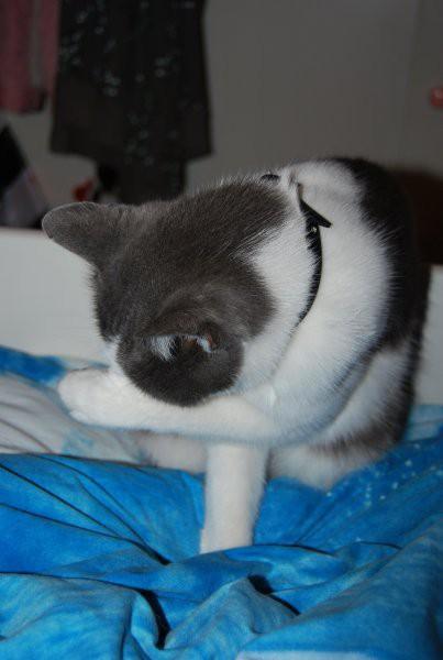 Oktober 2008 - foto