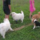 ne zgodi se nič, psi so skupaj dokler lastniki klepetajo, potem gredo svojo pot