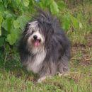 Prijazno in ubogljivo pasje bitje (tak kakršnih  baje ni...)