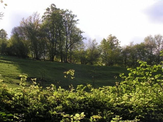 Pomlad - foto