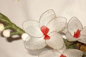 orhidejka